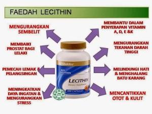 lecithin-faedah
